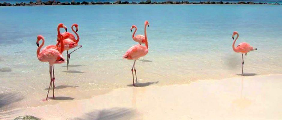 flamingo mania