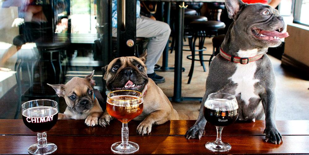 quanto è importante essere pet-friendly per un locale?