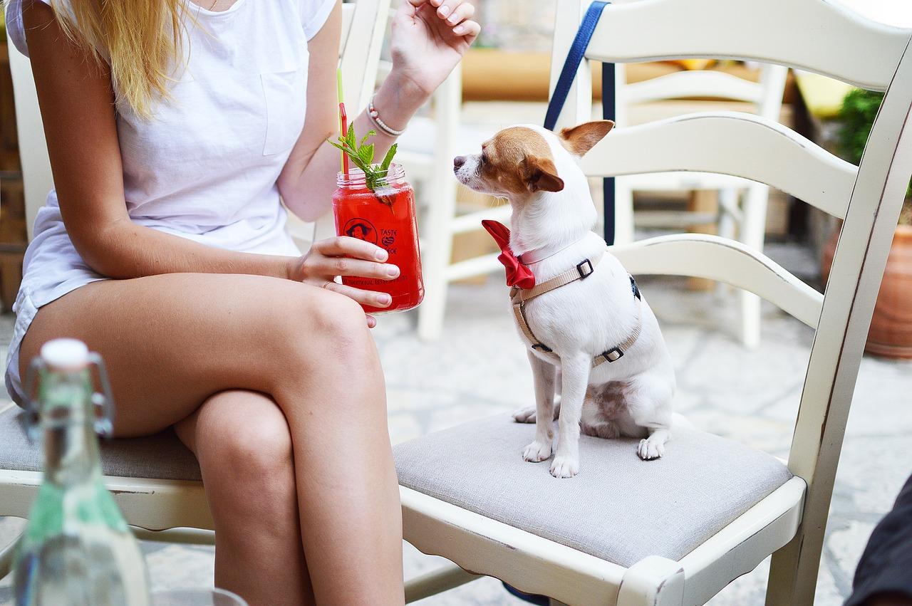 quanto è importante essere pet-friendly per un ristorante