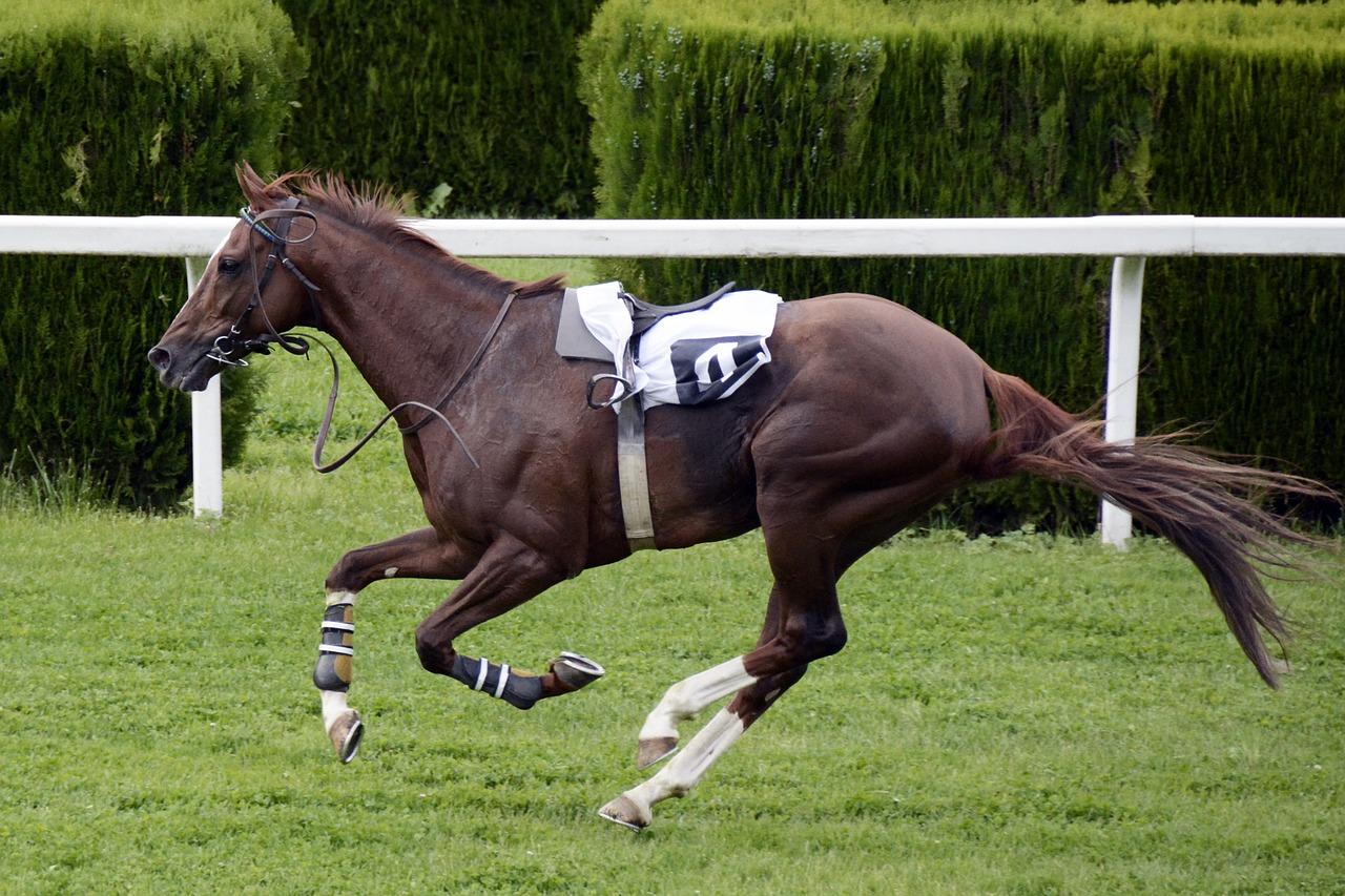 aste di cavalli di Deauville