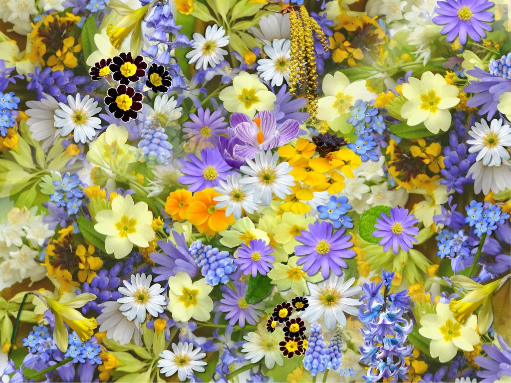 fiori di primavera in terrazza